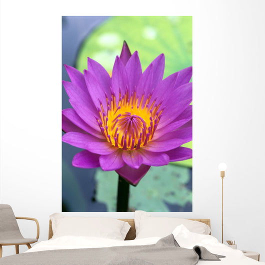 Close-Up Detail Of Vibrant Lily Flower, Lily Pad Wall Mural
