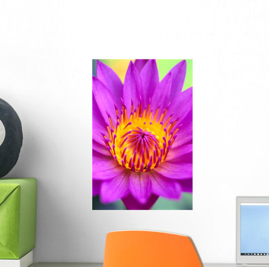 Extreme Close-Up Of Center Of Pink Water Lily Flower, Yellow Center Wall Mural