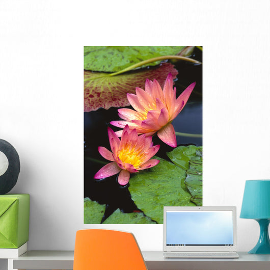 Close-Up Of Two Pink Water Lily Flowers, Lily Pads Wall Mural