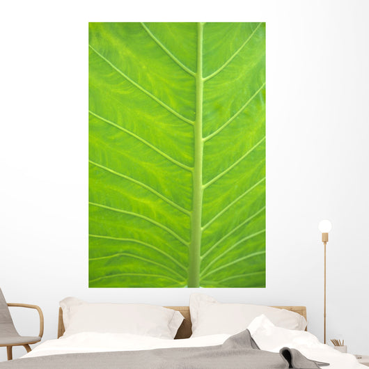 Leaf Detail, Background Wall Mural