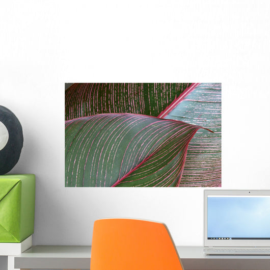 Detailed View Of A Heliconia Indica Leaf, Green With Red Lines Wall Mural