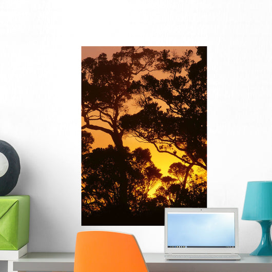Ohia Trees Silhouetted At Sunset With Pale Orange Yellow Sky Wall Mural