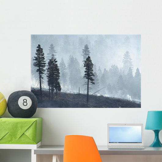 Logged Forest Wall Mural