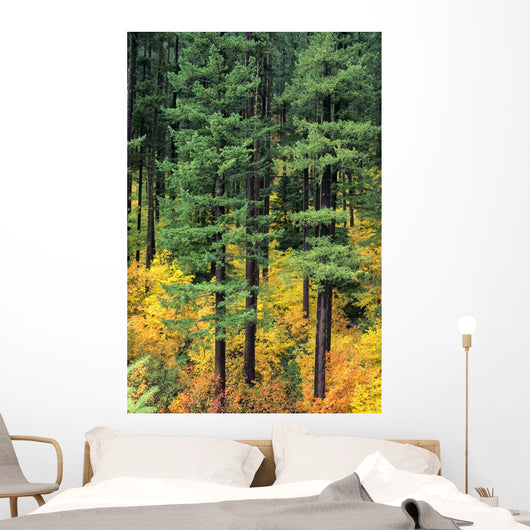 Oregon, Cascade Mountain Range, Pine Trees And Fall Colors Wall Mural