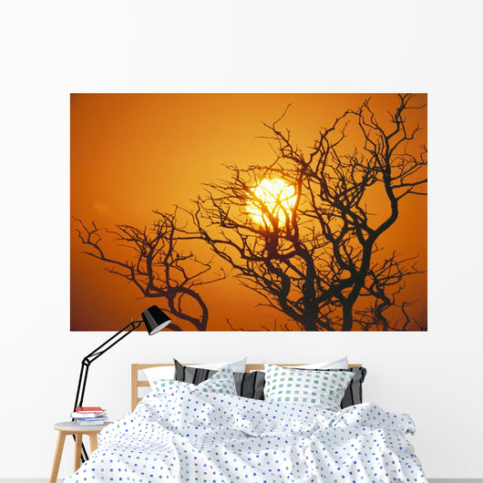 Hawaii, Branches Of Keawe Tree Silhouetted Against Sunset Wall Mural