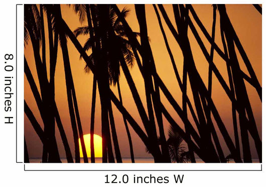 Hawaii, Molokai, Kapuaiwa Coconut Grove, Trees Silhouetted At Sunset Wall Mural