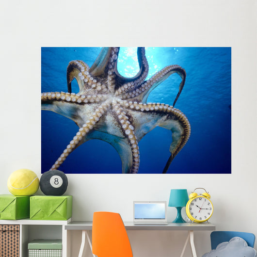 Hawaii, Day Octopus In Midwater, Underside With Sun Shining Through Wall Mural