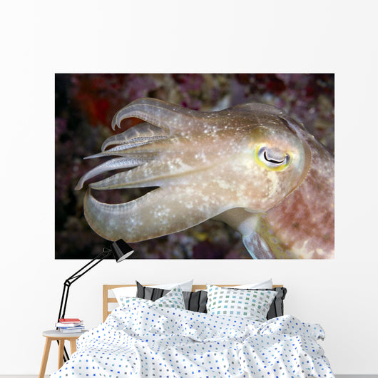Indonesia, Cuttlefish Close-Up Side View With Eye Closed Wall Mural