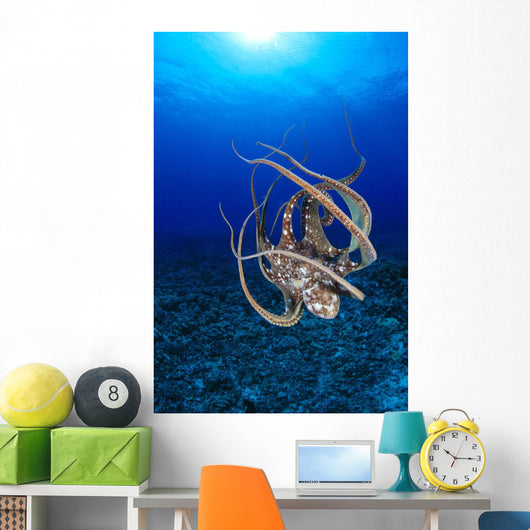 Hawaii, Day Octopus Floating To Reef Bottom, Sunburst Wall Mural