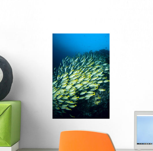 Mexico, Schooling Blue And Gold Snapper Wall Mural