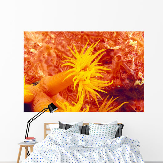 Detailed View Of Orange Tube Coral Wall Mural