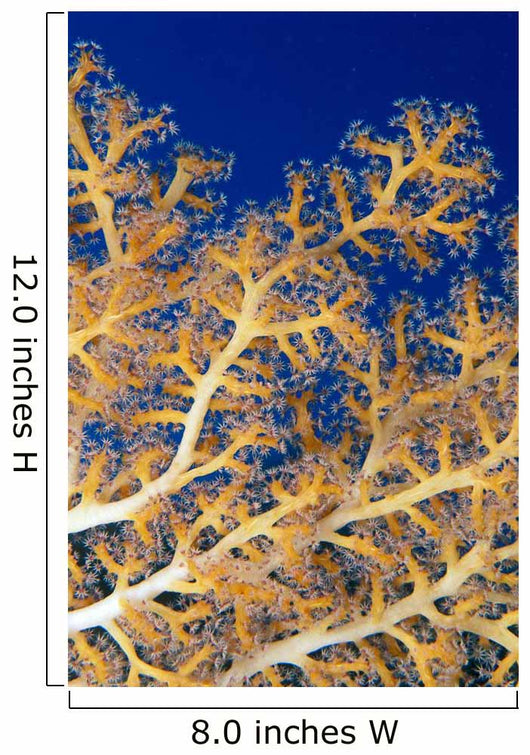 Fiji, Close-Up Of Soft Coral Showing Polyps Feeding Wall Mural