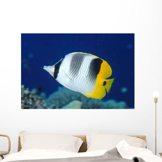 Fiji, Pacific Double-Saddle Butterfly Fish Close-Up Side View Wall Mural