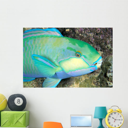 Indonesia, Bleeker's Parrot Fish Close-Up Side View, Colorful Wall Mural