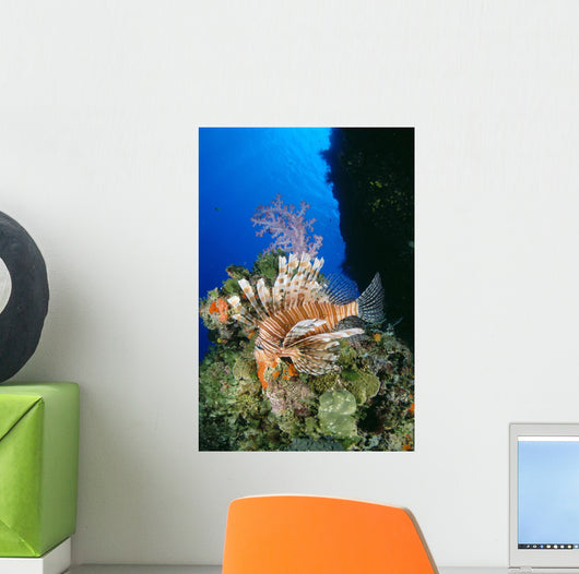Fiji, Lionfish And Alcyonarian Coral Wall Mural