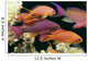 Fiji, Close-Up Side View, One Male And Several Female Lyretail Anthias Wall Mural