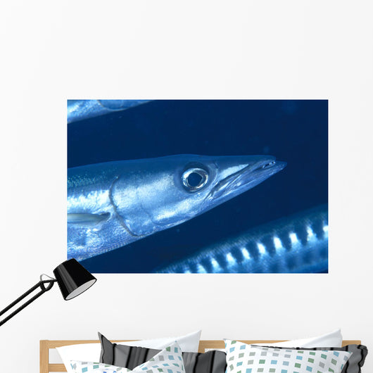 Solomon Islands, Extreme Close-Up Of Barracuda, Side View Of Head Wall Mural