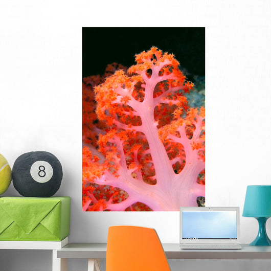 Indonesia, Soft Coral Detail Pink Stem With Bright Orange Polyps Wall Mural