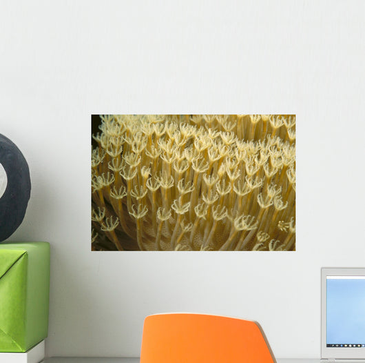 Indonesia, Yellow Soft Coral Close-Up Wall Mural
