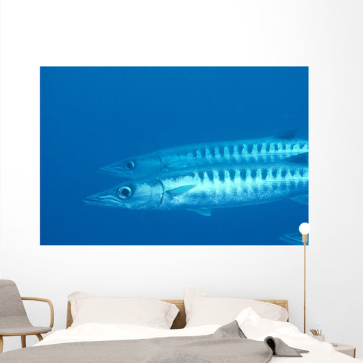 Palau, Barracuda Pair Side View In Clear Blue Ocean Wall Mural