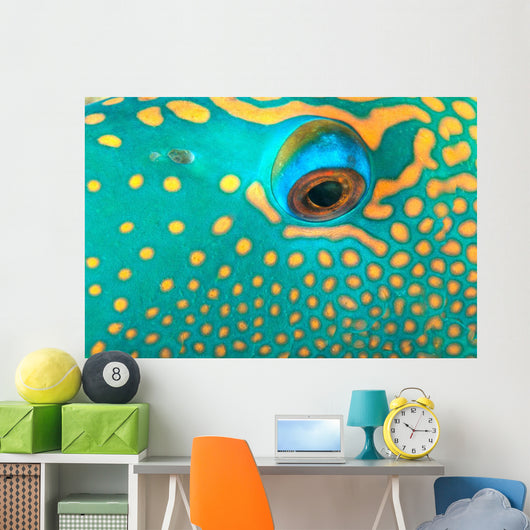 Australia, Extreme Close-Up Eye Of Bicolor Parrotfish Wall Mural