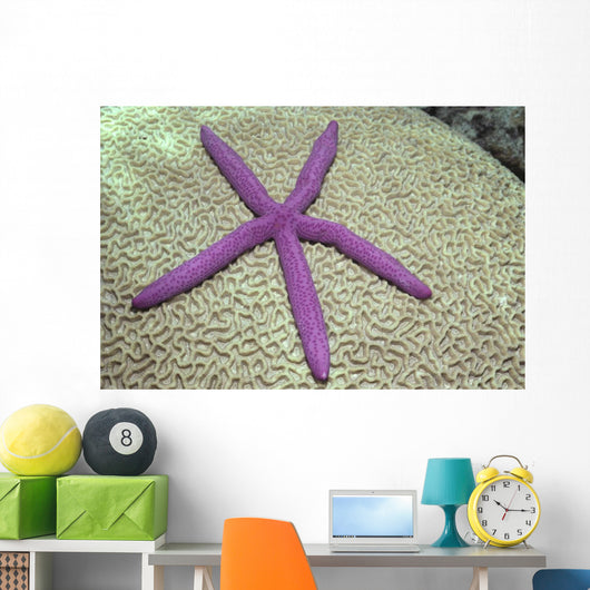 Indonesia, Pink Sea Star On Brain Coral Wall Mural