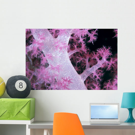 Palau, Alcyonarian Coral Pink Detail, Black Background Wall Mural