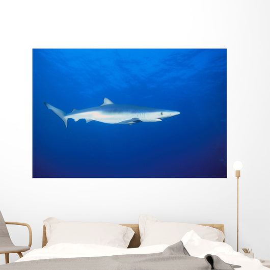 California, Blue Shark Clear Blue Water Near Surface, Side View Wall Mural