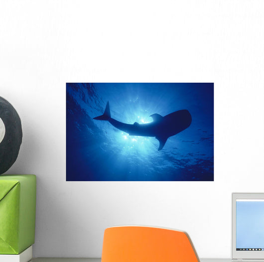 Hawaii, Whale Shark Backlit By Sunburst Silhouette Wall Mural