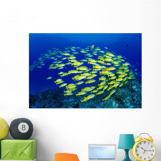 Hawaii, Large School Of Blue Stripe Snappers Over Reef Wall Mural