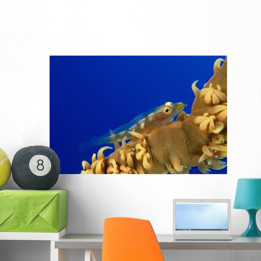 Hawaii, Goby On Wire Coral Wall Mural