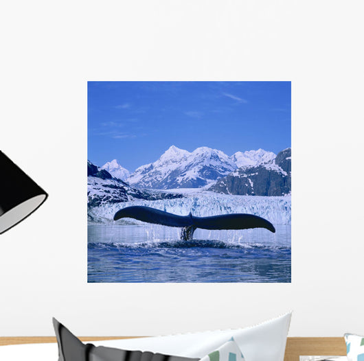Humpback Whale Lifting Flukes Wall Mural