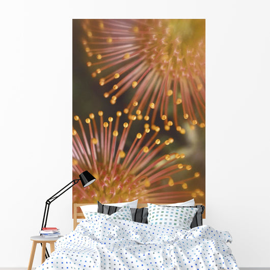 Extreme Close-Up Yellow Pin Cushion Protea Detail Of Plant Blossoms Wall Mural