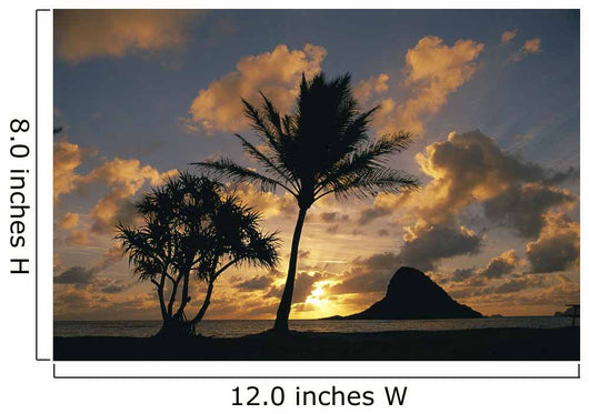 Mokoli'i Island At Sunrise Golden Light Palm Tree In Foreground Wall Mural