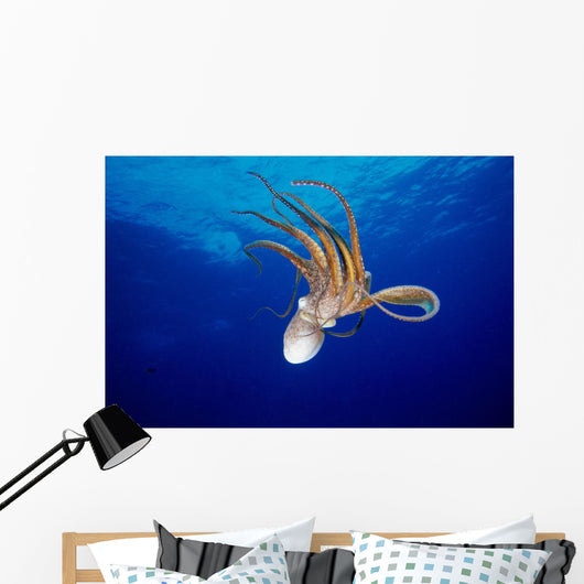 Hawaii, Full Length View Day Octopus Floating Down From Surface Wall Mural