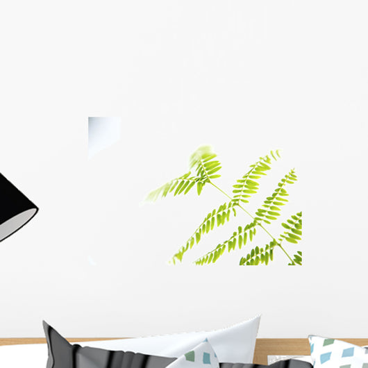Green Royal Poinciana Tree Leaves With White Studio Background Wall Mural