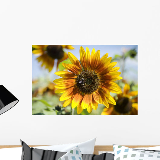 Oregon, Portland, Sauvie Island, Sunflower Hybrid And Bee Wall Mural