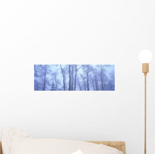 Frost Covered Trees In Fog, Alaska Highway, British Columbia, Canada Wall Mural