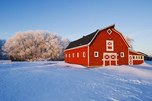 Red Barn, Winter, Near Oakbank, Manitoba, Canada Wall Mural