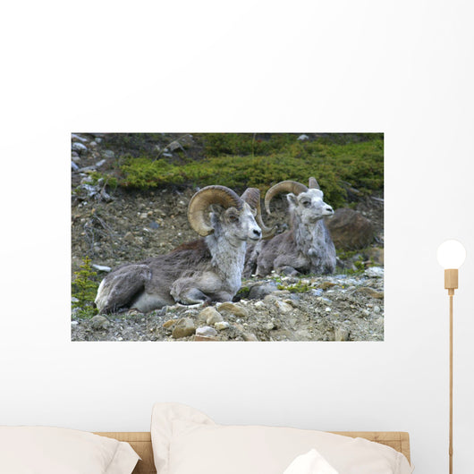 Stone Mountain Sheep, Stone Mountain Provincial Park, British Columbia Wall Mural