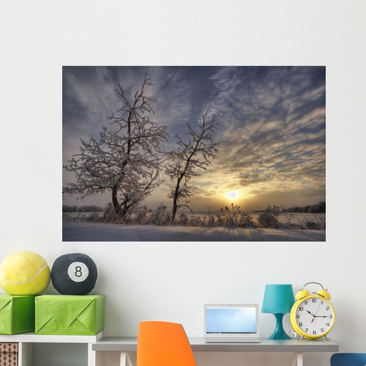 Snow Covered Trees Silhouetted By Sunrise On The Alberta Prairies Wall Mural