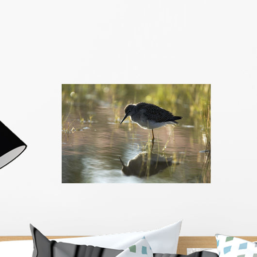 Lesser Yellowlegs Standing In Water, Ivvavik National Park, Yukon Wall Mural