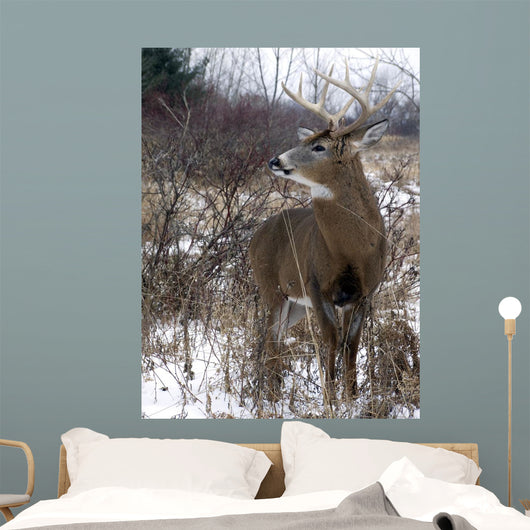 White-Tailed Deer Wall Mural