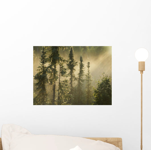 White Spruce In Mist At Sunrise, Along The Dempster Road, Yukon Wall Mural