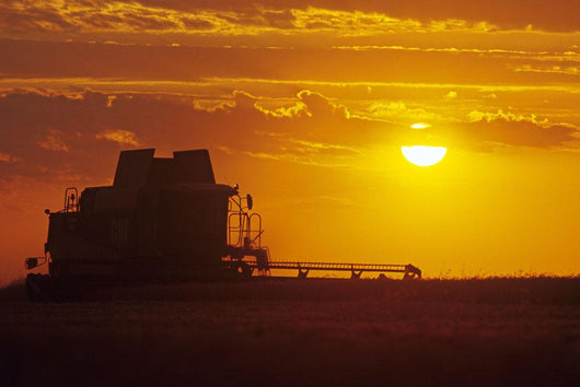 A Combine Harvests Winter Wheat At Sunset, Near Oakbank, Manitoba Wall Mural