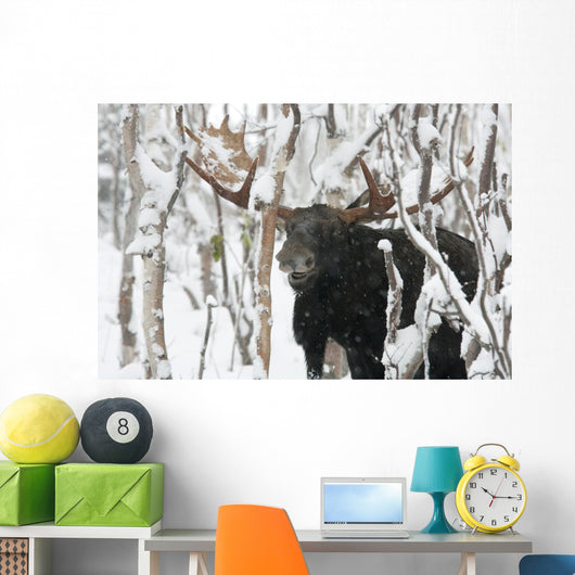 Moose Male Standing Wall Mural