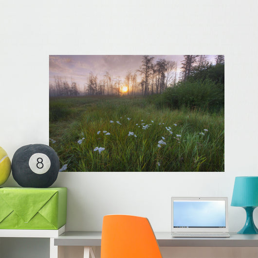 Prairie Wildflowers Wall Mural