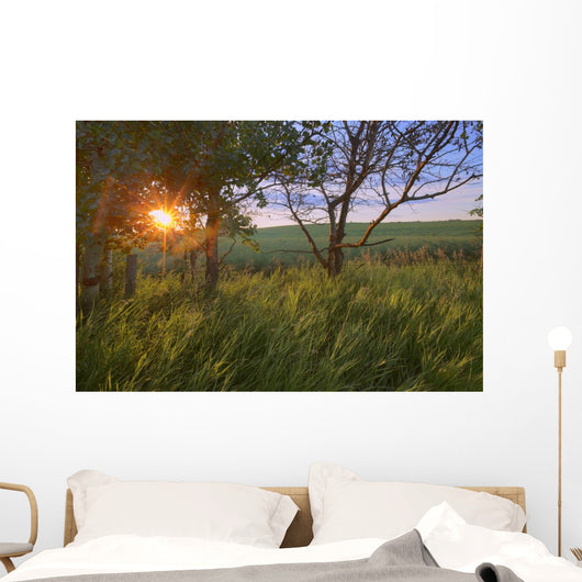 Sunrise On A Farm During The Summer In Central Alberta Wall Mural