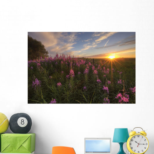 Prairie Wildflowers During Sunset In Central Alberta Wall Mural