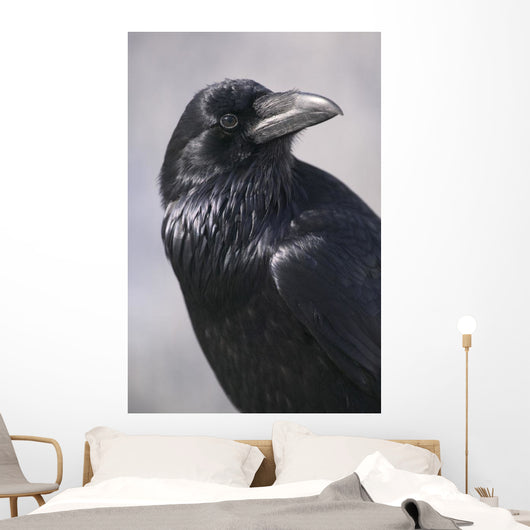 Common Raven, Jasper National Park, Alberta Canada Wall Mural